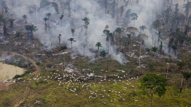 Desmatamento para pasto no Pará em 2009