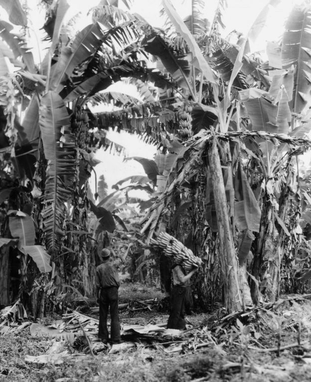 A worker on a banana plantation in Guatemala in the 1950s