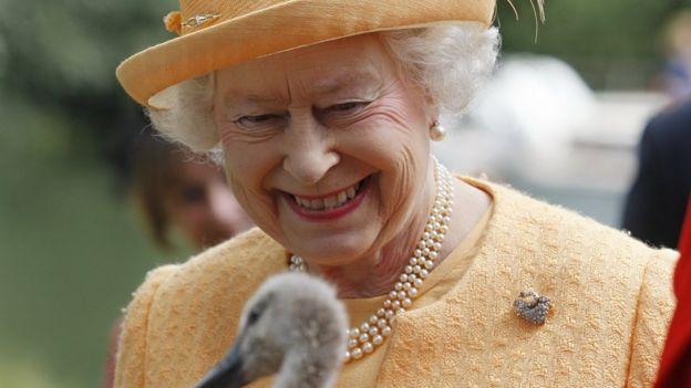 Королевские лебеди погибли от птичьего гриппа