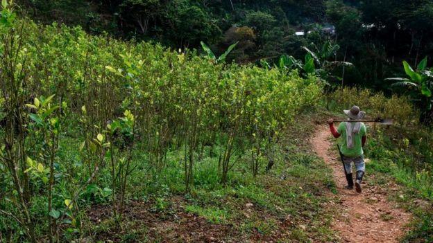 Campesino en Briceño, en el departamento de Antioquia.
