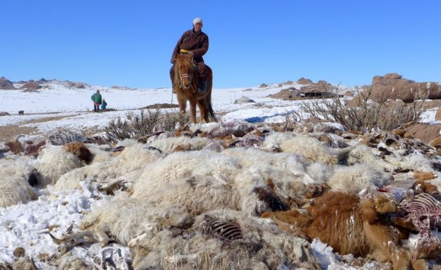 A herdsman on a horse next to a pile of animal carcasses