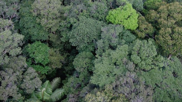 Rainforest canopy, Amazon (Image: Kyle Dexter)