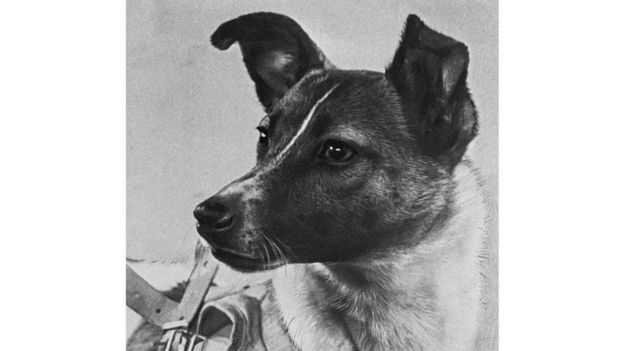 أصبحت الكلبة لايكا مثلها مثل مركبة سبوتنيك الروسية أيقونةً للجهود السوفيتية الأولى على صعيد استكشاف الفضاء Alamy