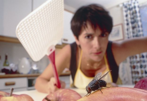 Imagem de uma mulher esmagando uma mosca