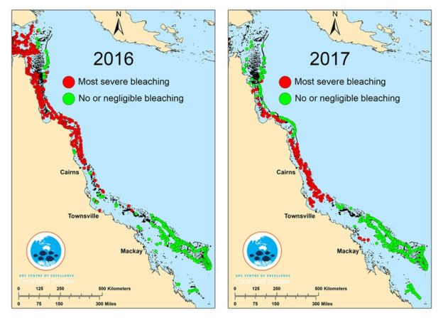 A graphic showing damage to the Great Barrier Reef in 2016 and 2017