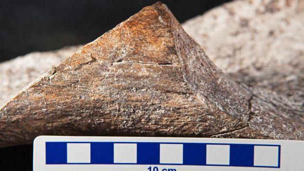 Mastodon kemiği
