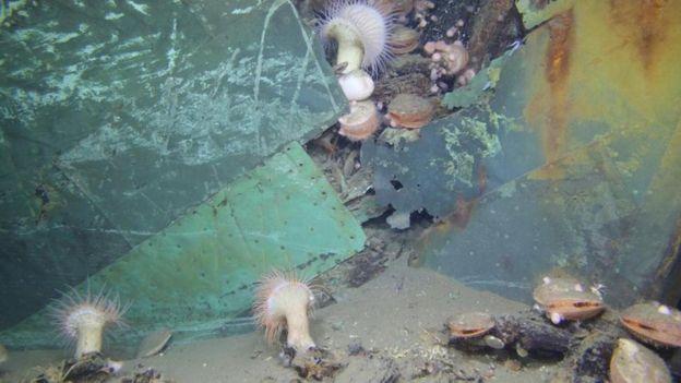 墨西哥湾的一艘海底沉船