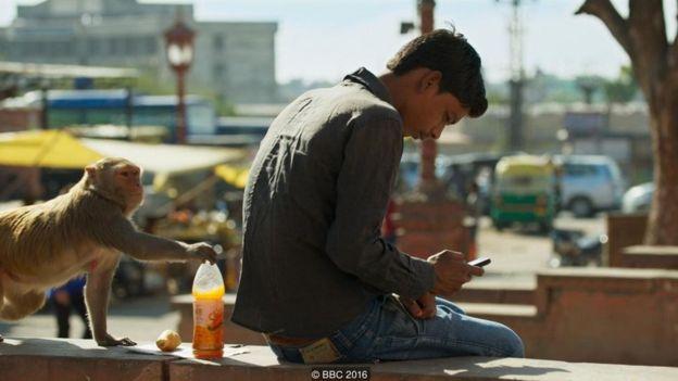 Lũ khỉ tại Jaipur nghịch ngợm 'chôm' đi bất kỳ món đồ ăn, thức uống nào chúng vớ được