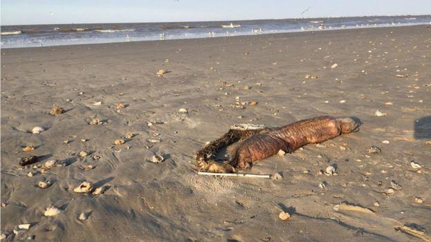 La anguila fotografiada en la playa