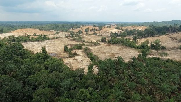 The Orang Rimba forest