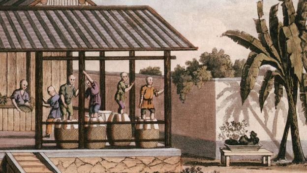 Ilustración de los trabajos en una plantación de té.