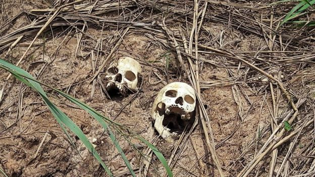 Skulls of victims of fighting in Kasai