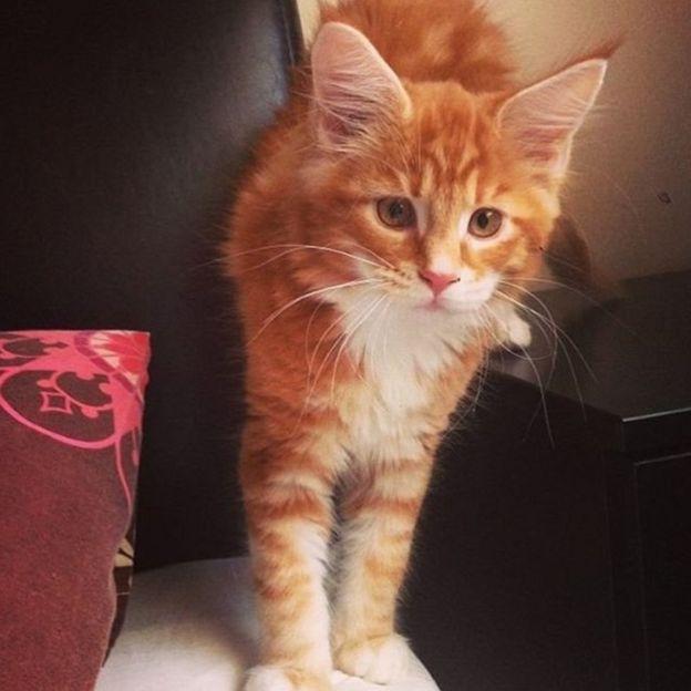 кіт Омар