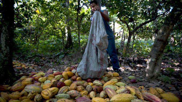 Caco venezolano