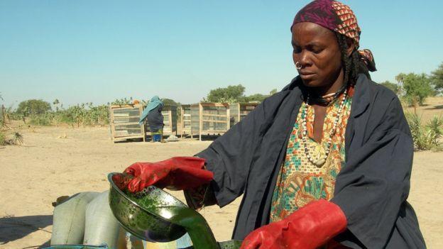 Mujer procesando el alga llamada spirulina
