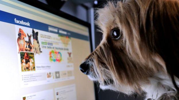 Un perro mira Facebook