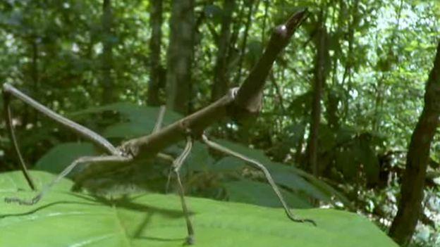 Insecto sobre hoja
