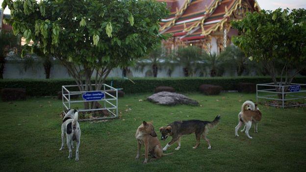 ประเทศไทยมีประชากรสุนัขมากกว่า 7.38 ล้านตัว ตามสถิติปี 2559 ของสำนักงานปศุสัตว์