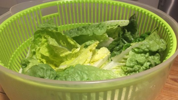 Folhas verdes em recipiente plástico