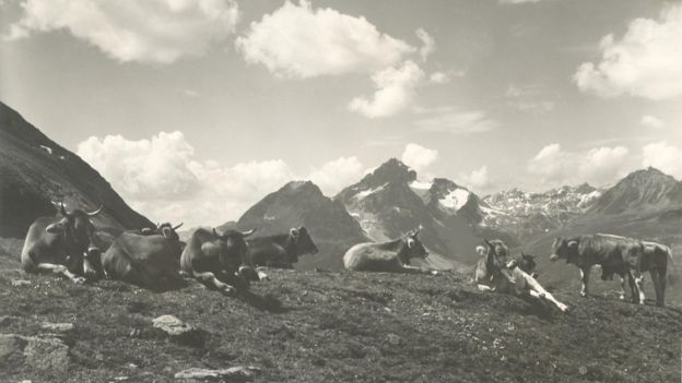File photo of Alpine dairy farming