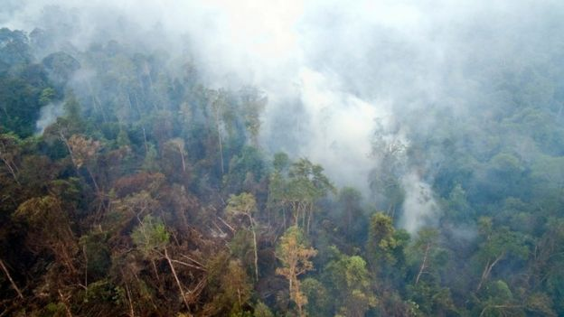 Undated handout photo issued by Greenpeace taken from drone footage of smoke from smouldering peat land fires rising through trees in forest and orang-utan habitat near a PT Artu Energi Resourses concession in Ketapang, West Kalimantan