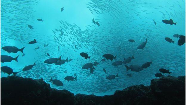 Cardume de peixes na reserva Vitória-Trindade