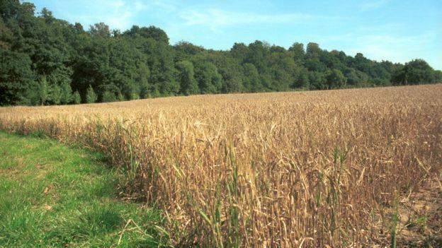 Farmland and woodland (Image: BBC)