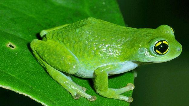 India's maverick 'frog man' - BBC News