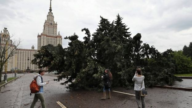 Tree felled in Moscow