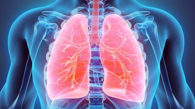 Ilustración de un par de pulmones