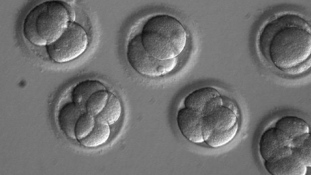 Embriões humanos