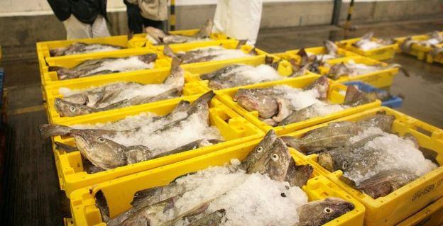 Peixes em caixas com gelo