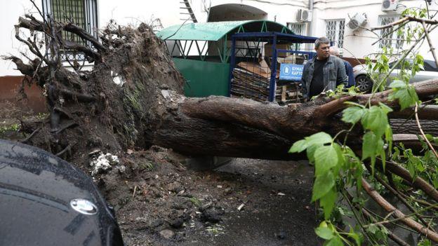 В Москве ветер повалил около 400 деревьев, сообщают информационные агентства/ ARTYOM GEODAKYAN/TASS