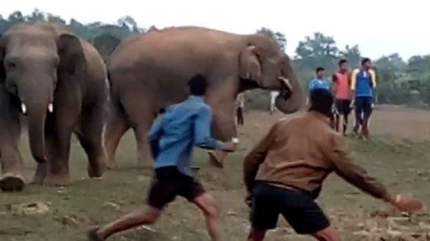 elephant attack in Orissa