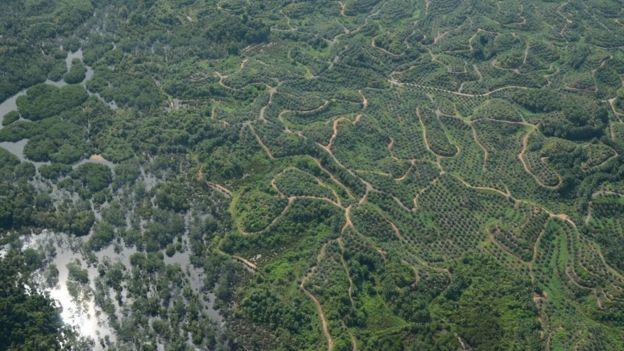 Borneo orman alanları