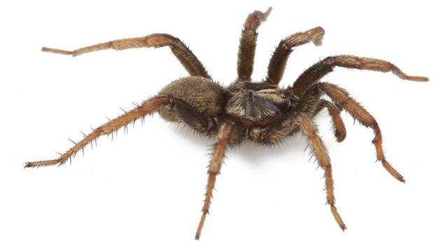 Aptostichus barackobamai ni mmoja wa buibubi aina 33 wa trapdoor. Waligunduliwa 2013
