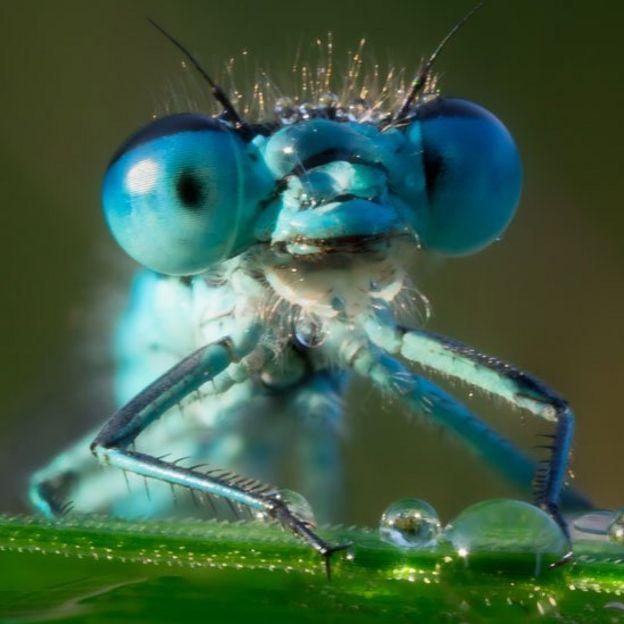 Ojos de una libélular
