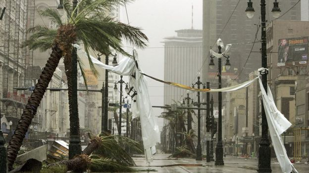 Trees blown over in the street by Hurricane Katrina, New Orleans, 2005