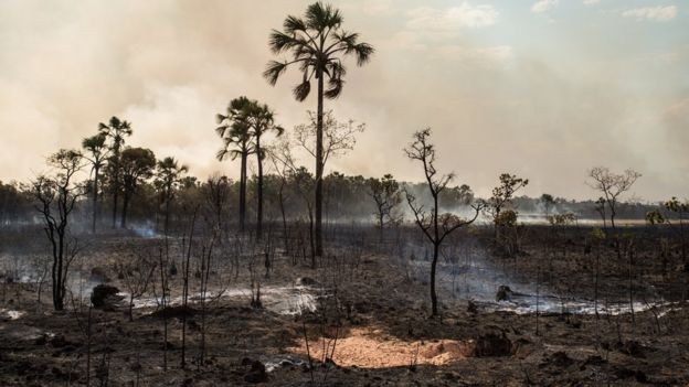 Área atingida por incêndio da Chapada dos Veadeiros
