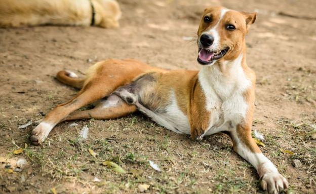 Perro con tres patas