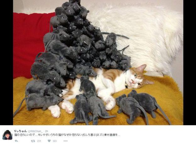 Picture of Twitter user RitzChan's cat