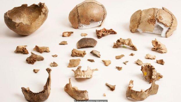Dấu răng người có trên những khúc xương được tìm thấy trong hang động