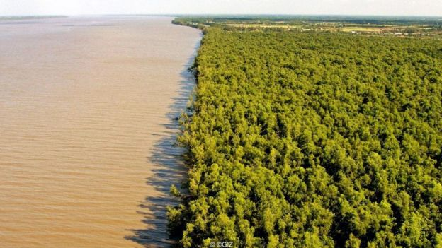 Các khu rừng ngập mặn ở ven biển giúp chống xói mòn và giúp hạn chế tác hại của các trận bão