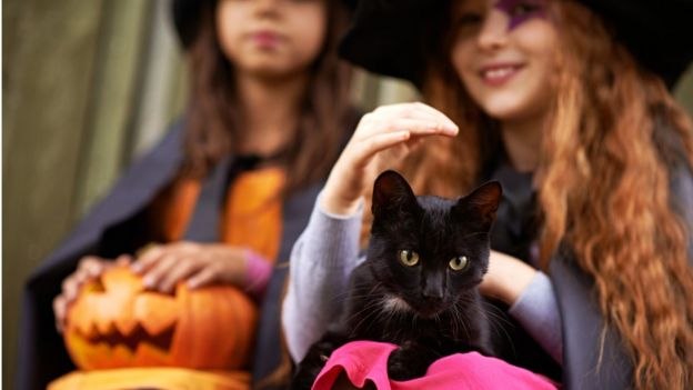 children dressed as witches with a black cat