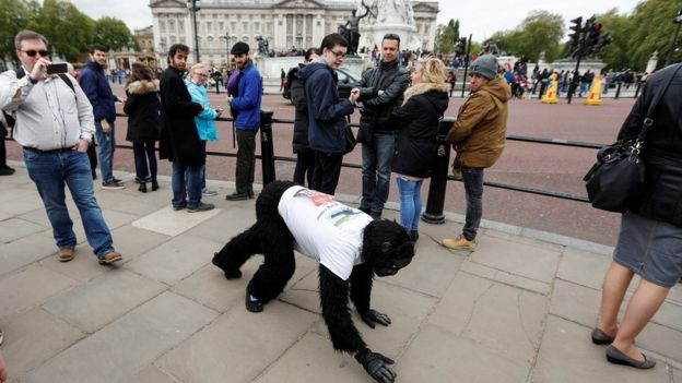The Ape has completed the London Marathon in an unusual way!