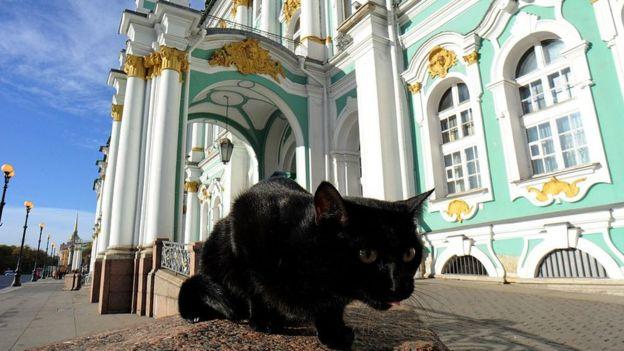 Gato negro frente al Museo Hermitage de San Petersburgo, Rusia.