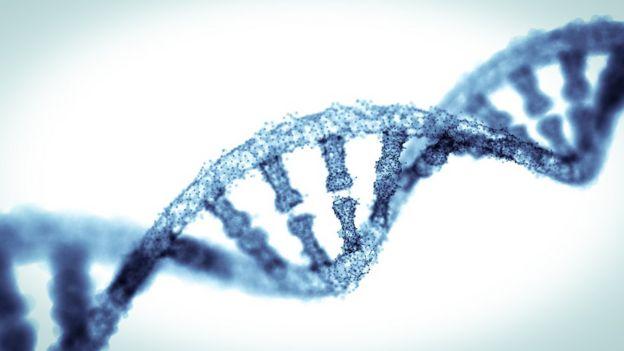 Modelo de DNA