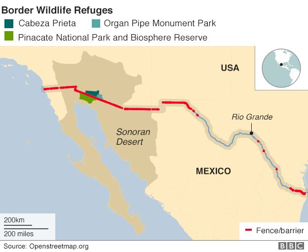 Trumps Divided Desert Wildlife At The Border Wall BBC News - Sonoran desert on us map