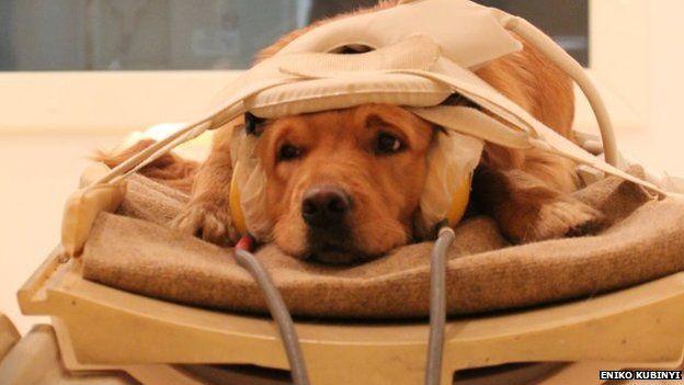 Dog in scanner