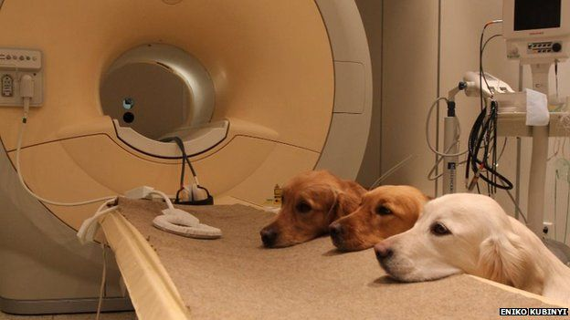 Dogs on scanner